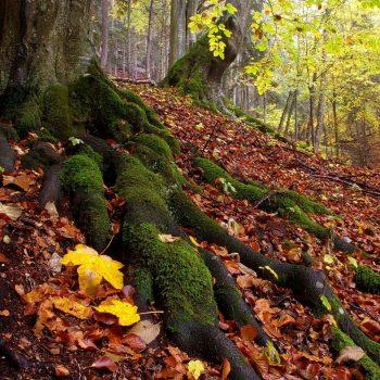 Prales pri Blajzlochu