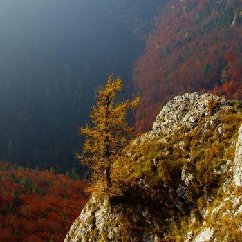 Dolina Bieleho potoka